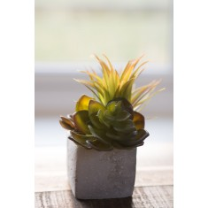Faux Succulents In A Stone Planter