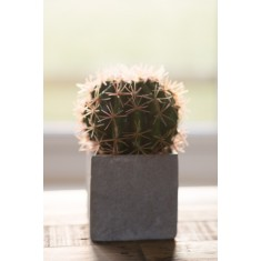 Faux Ball Cactus