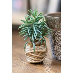 Faux Peperomia With Rope